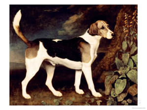 Ringwood- Brocklesby Foxhound 1792