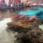 Sköterske hajar