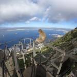 Makak uppe på klippan med utsikt över Gibraltarbukten.