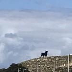 Torre del Mar med el toro som syntes lång väg.