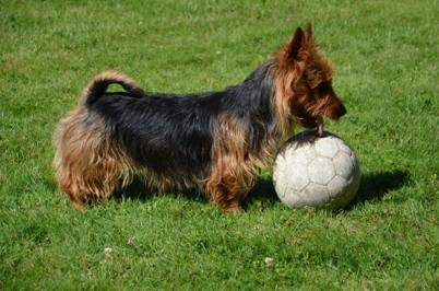 Theo älskar också leka med bollen