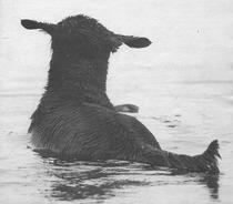 """Foto: Lucia Ugo. """"Min vän den glade badaren uti San Remo stad""""...heter Topazia del Corbezzolo. Omslagsbild på Charmören 2/1995."""