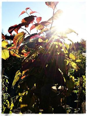 Klätterväxter höst 2016