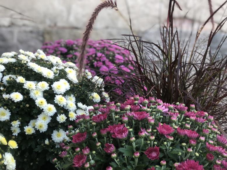 Blogg aktuellt | Tyresö Handelsträdgård