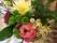 MH Blommor