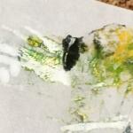 Grönt litet lamm