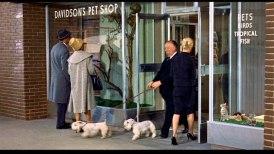 Hitchcock kommer ut med två hundar u en fågeläffär i inledningen av filmen