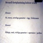 07 PhVet Ulfstrand