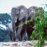 05-PhVet Östafrika