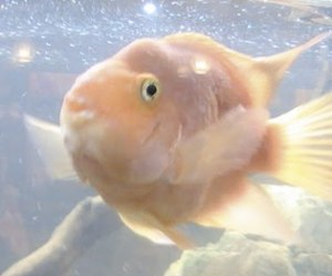 Daniel de la Rosa - fisken