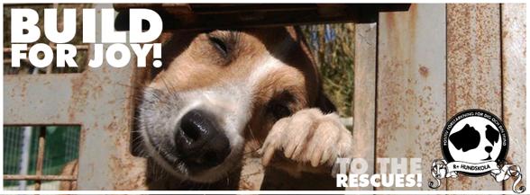 Under hösten 2013 startade R+ hundskola och volontären Malin Hanning en insamling för SOS Animals.