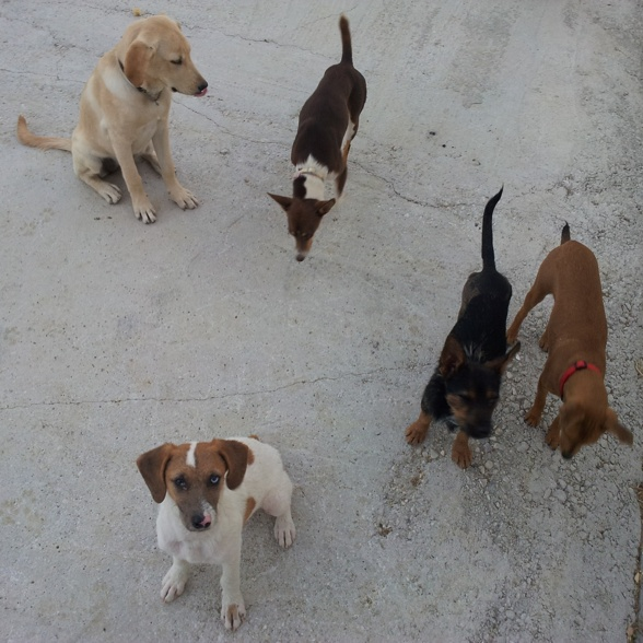 Gårdens småhundar inspekterar alla besökare.
