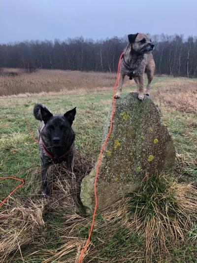 Zmilla balanserar självsäkert på en hög sten. Ziggie står still och väntar