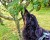 Tibia luktar i träd