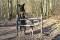Fokuserade hundar väntar på frisignal. Foto: Fredrik Rambris