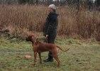 Buster, Charlie & Shila MH 264