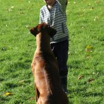 moa practising obedience with Liam