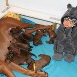 emil_puppies2days1
