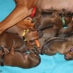 puppies2days2