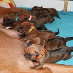 puppies2days3