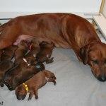 moa_puppies4days1