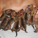 puppies3days2