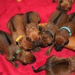 puppies6days1