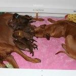 moa_yaya_puppies1