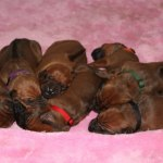 puppies8days5