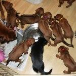 puppies29days2