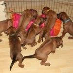 puppies29days5