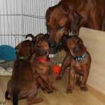 moa_puppies33days4