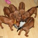 puppies40days6