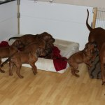 moa_puppies50days3