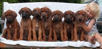 b-litter7weeks_groupphoto