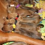 31_puppies