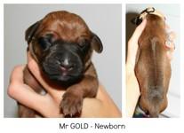 gold_newborn