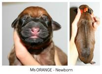 orange_newborn