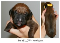 yellow_newborn