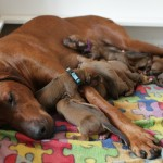 enya_puppies2days_1