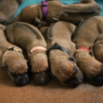 4days_puppies3