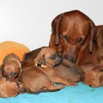 16days_enya_puppies1