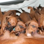16days_enya_puppies5