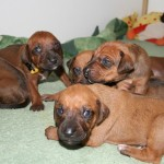 17days_puppies3