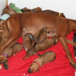 18days_enya_puppies1
