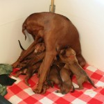 23days_enya_puppies1