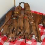 31days_puppies3