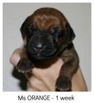 orange1week1