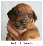 blue2weeks