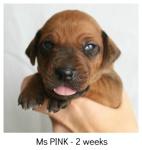 pink2weeks